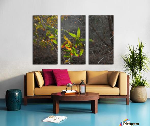Autumn light Split Canvas print