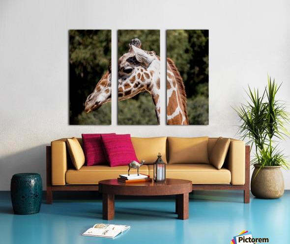 Profile of a Giraffe Split Canvas print