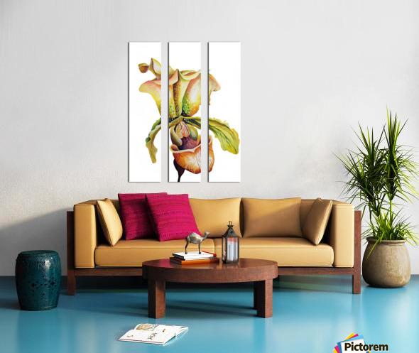 Blooming Paphiopedilum Orchids Split Canvas print