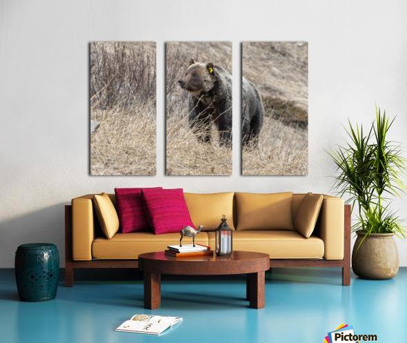 6897 - Grizzly Bear 2160 Split Canvas print