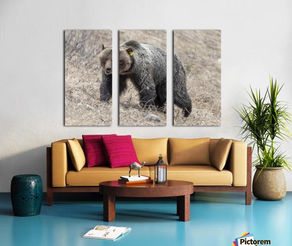 6970 - Grizzly Bear 2160 Split Canvas print