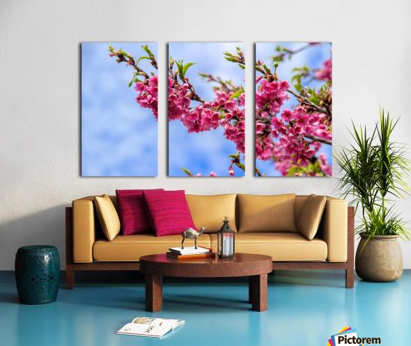 Tree XIII - Cherry tree Split Canvas print