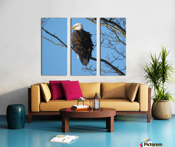 Bald Eagle Sitting on a Branch Split Canvas print