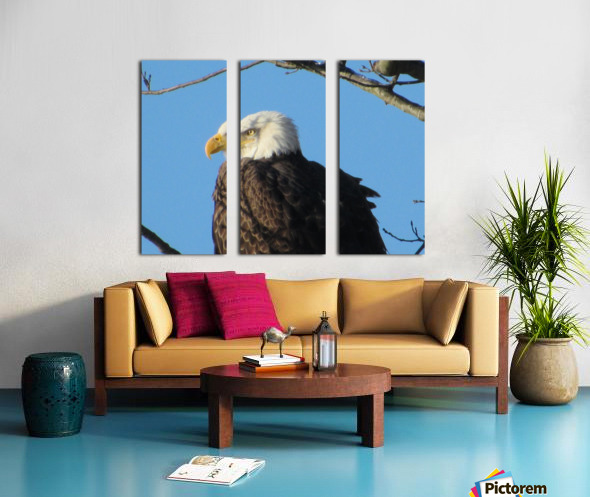 Bald Eagle Close Up Split Canvas print