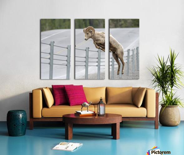 7585 - Bighorn Sheep - Kananaskis Country Alberta. Canada Split Canvas print