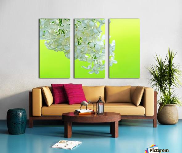 Cool White Lilac On Lemon Lime Split Canvas print
