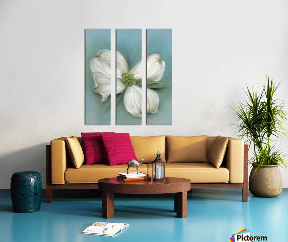 White Dogwood with Leaf Split Canvas print