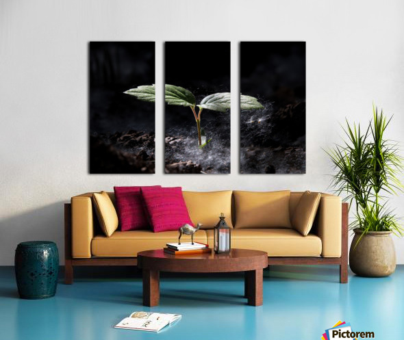 Young Sapling Split Canvas print