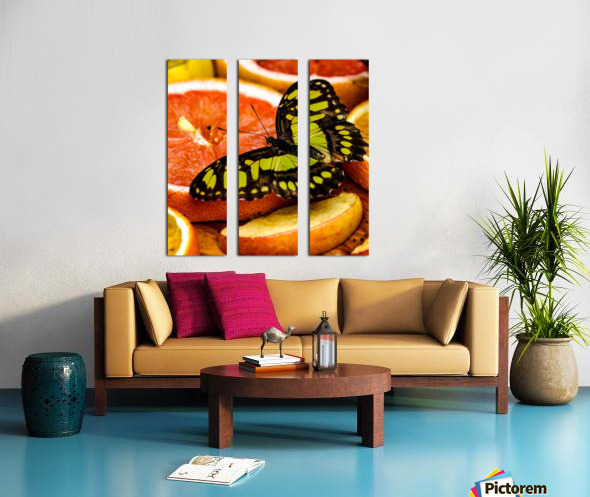 Butterfly And Oranges Split Canvas print