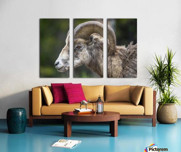 5513 - Big Horn Sheep  Banff National Park Canada Split Canvas print