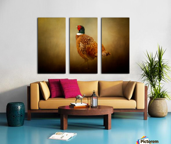 Ring Necked Pheasant Split Canvas print