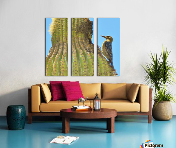 Cactus Wren Split Canvas print