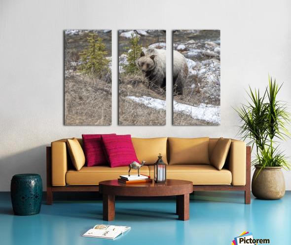 6944 - Grizzly Bear Split Canvas print