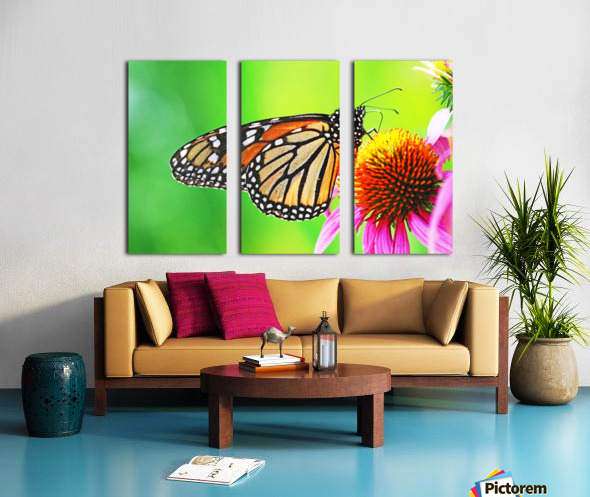 The Beauty Of The Monarch Butterfly Split Canvas print