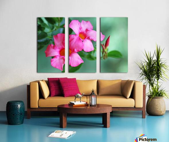 Mandevilla In Pink Split Canvas print