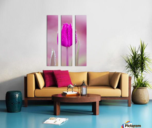 Pink Tulip II Split Canvas print