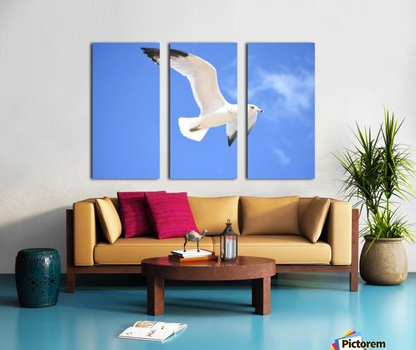Seagull Overhead Split Canvas print