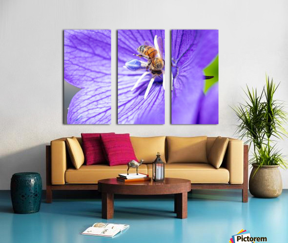 Pollinating Bee Split Canvas print