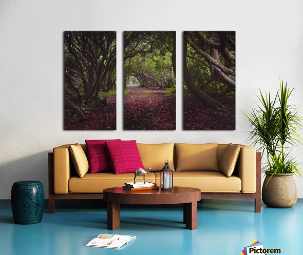 Rhododendron arched walkway Split Canvas print