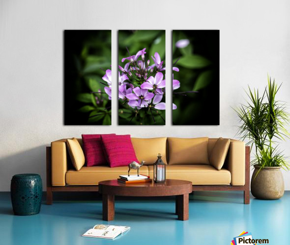 Beeplant Split Canvas print