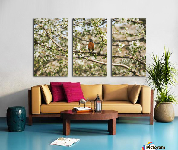 Robin Sitting on Branch Split Canvas print