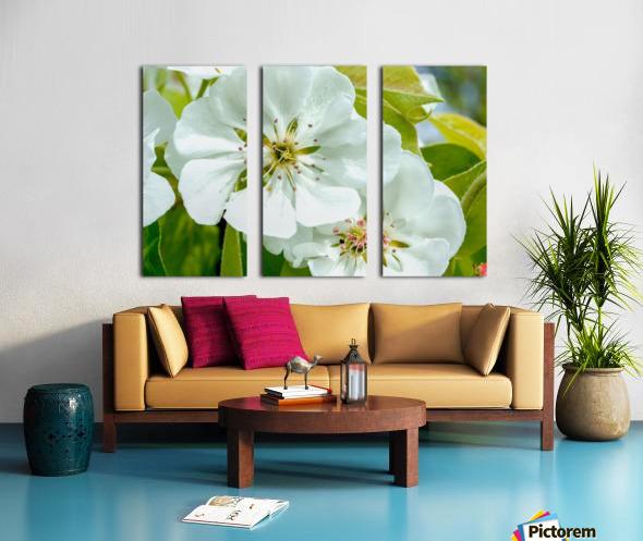 Pear Blossom - No. 1 Split Canvas print