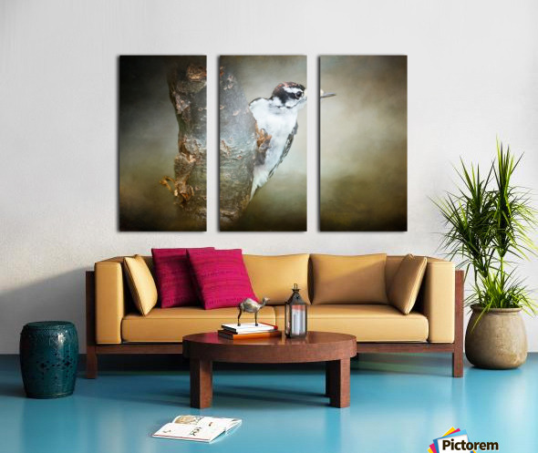 Juvenile male Downy Woodpecker Split Canvas print