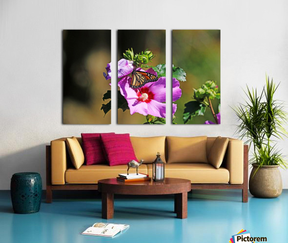 Monarch And Rose Of Sharon Split Canvas print