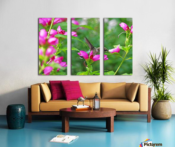 The Lure Of The Pink Turtlehead Split Canvas print