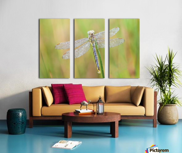 An Fire dragonfly Split Canvas print