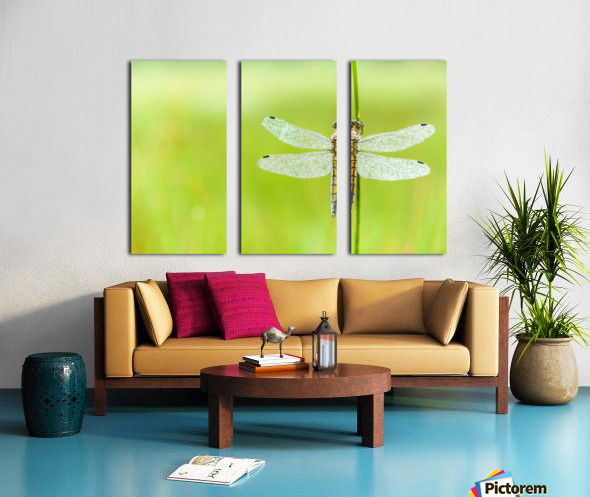 An Fire dragonfly Split Canvas print