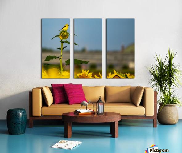 Sunflower Perch Split Canvas print