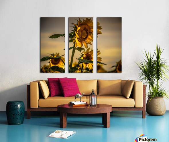 Gone with the Sunflowers Split Canvas print