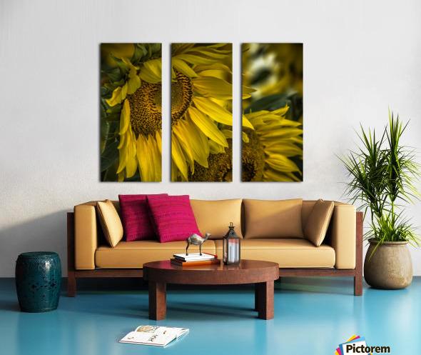 Sunflower Dawn  Split Canvas print