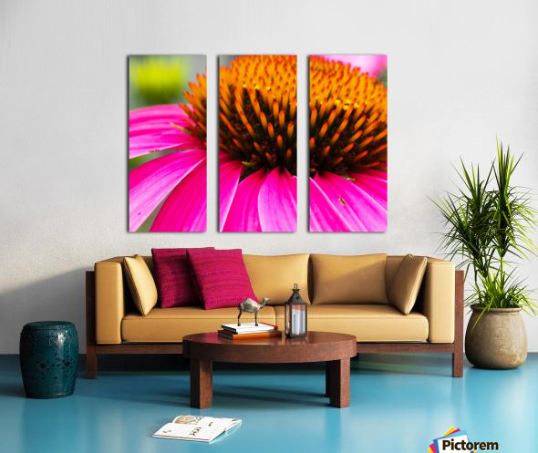 Cone Flower Split Canvas print