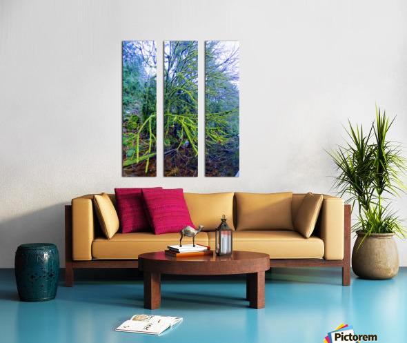 MOSSY BRANCHES Split Canvas print