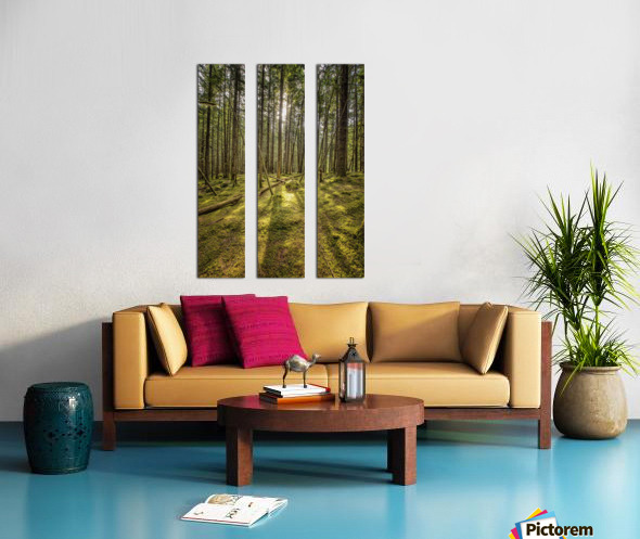 Mossy Forest Morning Split Canvas print