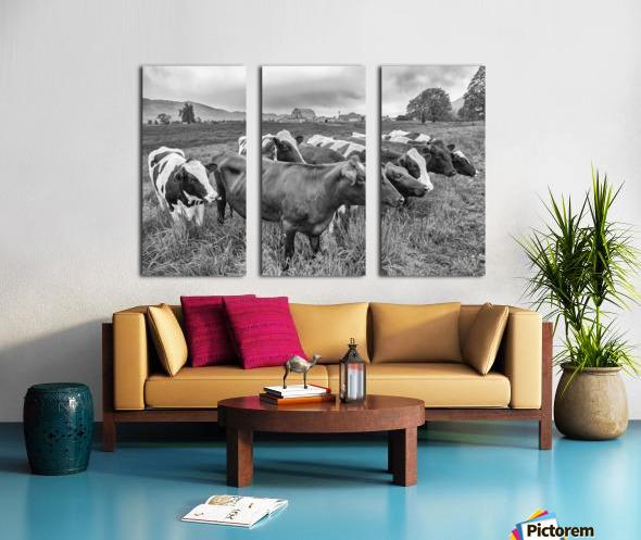 Cow Herd up Close Split Canvas print