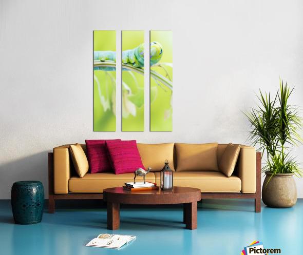 an Daphnis Nerii Split Canvas print