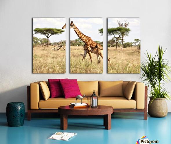 Giraffe Split Canvas print