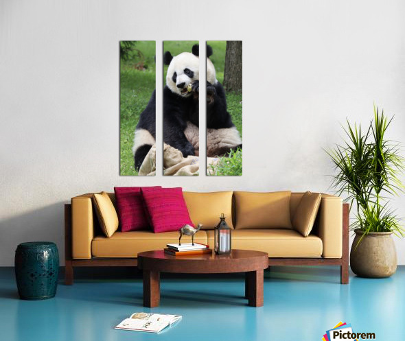 Panda Split Canvas print