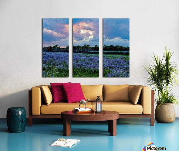 lupine sunset  Split Canvas print