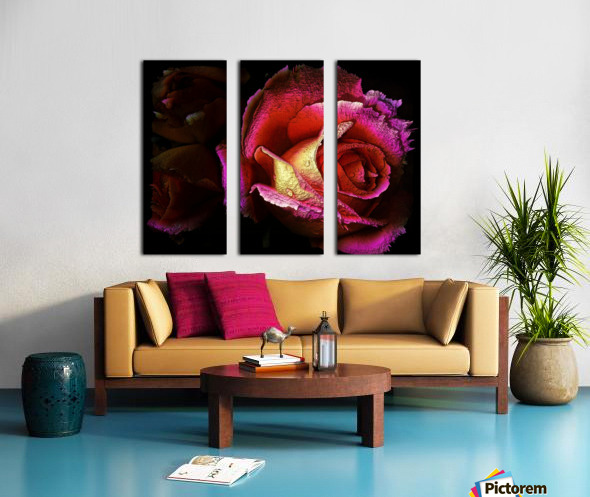 Textured Rose Split Canvas print
