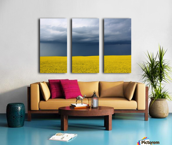 Summer Canola Split Canvas print