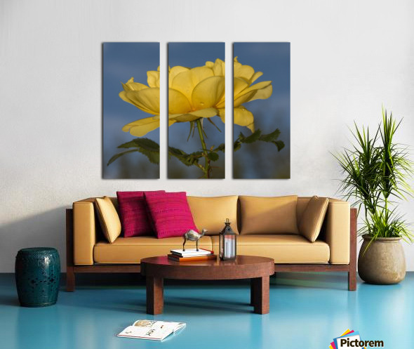 Yellow Rose Landscape Split Canvas print