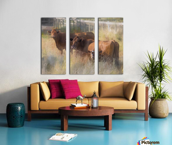 Three Cows  Split Canvas print