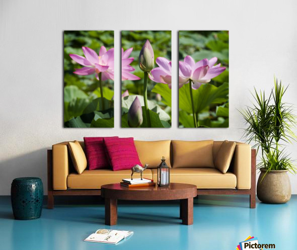 Lots bud with blooming lotus flowers behind Split Canvas print