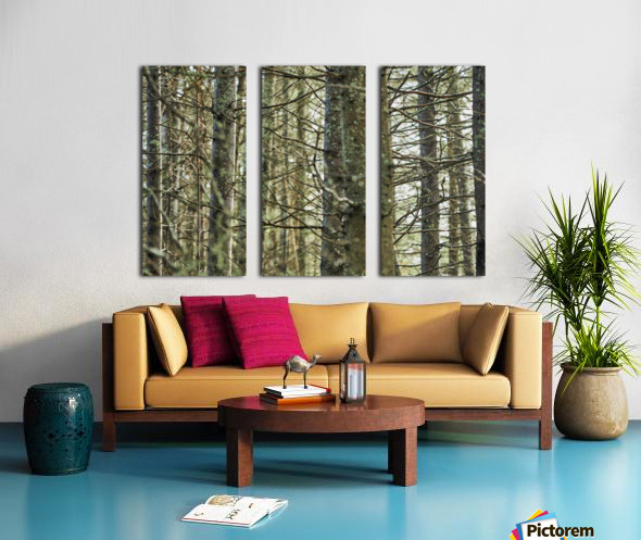 Trees in forest Mauricie National Park Quebec Canada Split Canvas print