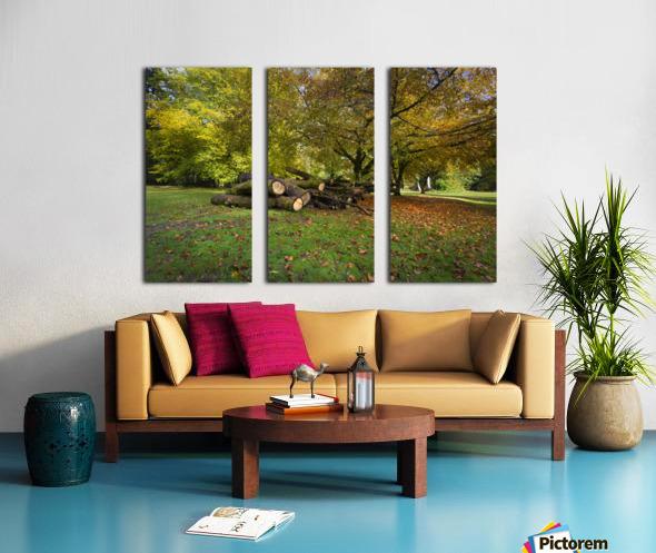 Autumn leaves and cut trees Split Canvas print