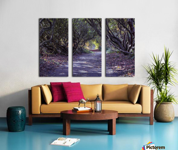 Tree lined Rhododendron walkway Split Canvas print
